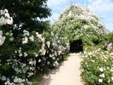 les-fleurs-de-terra-botanica-angers-780774-797314