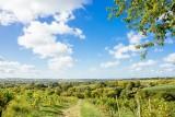 les-vignobles-de-savennieres-copyright-les-conteurs-destination-angers-4507-1000px-928502