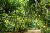 terra botanica jardin parc angers végétal