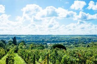 Dans les vignobles de Loire